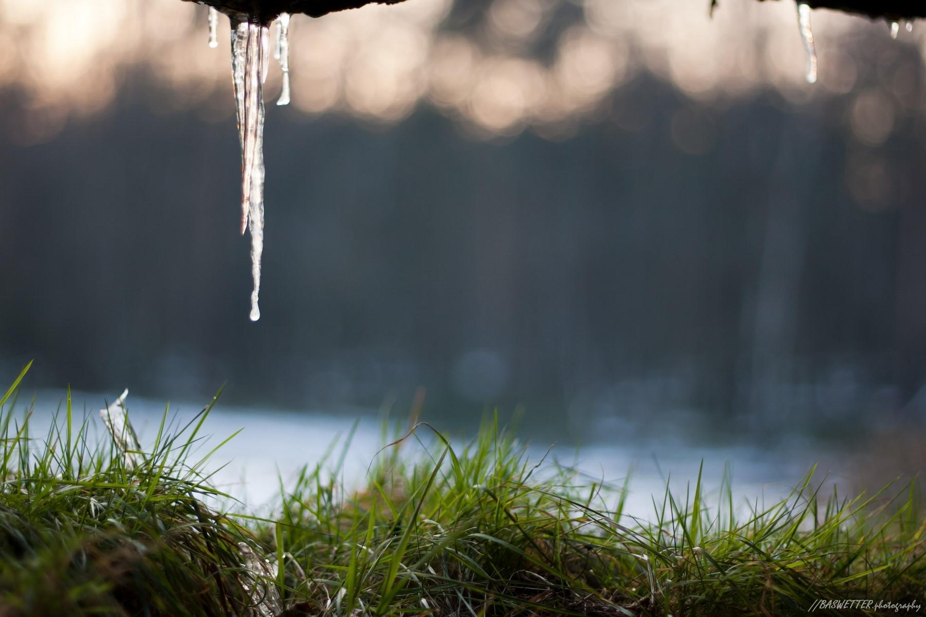IJspegels in de wildobservatiehut van het winterse bos De Sysselt bij Ede