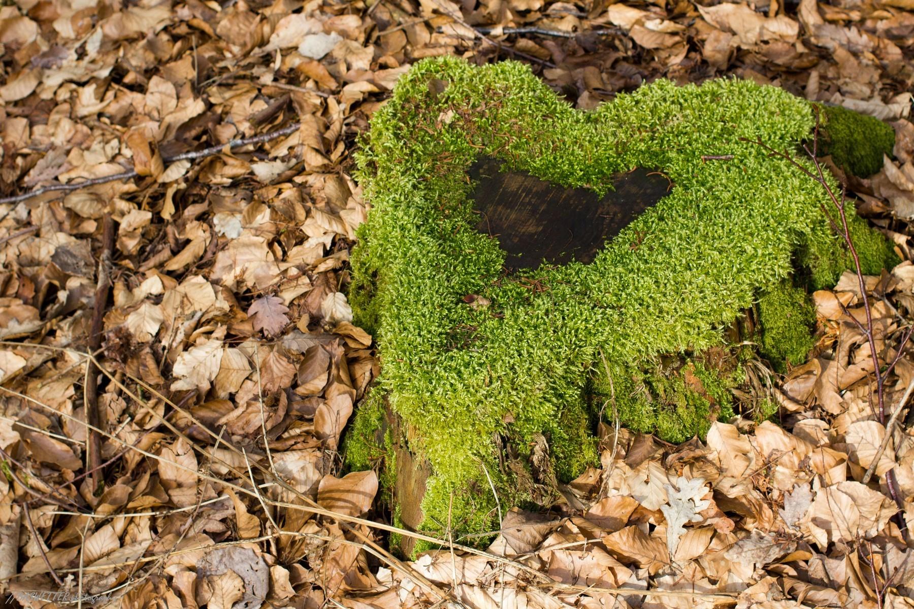 Het groene hart, van mos