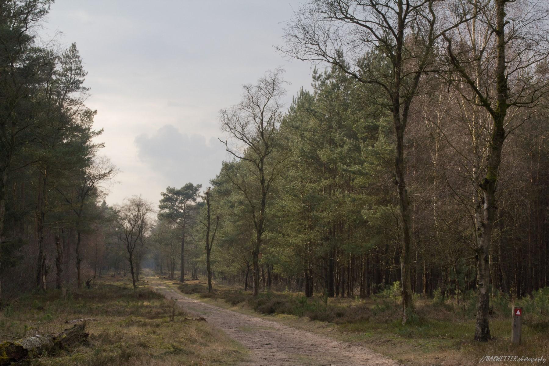 Een bospad als een schilderij