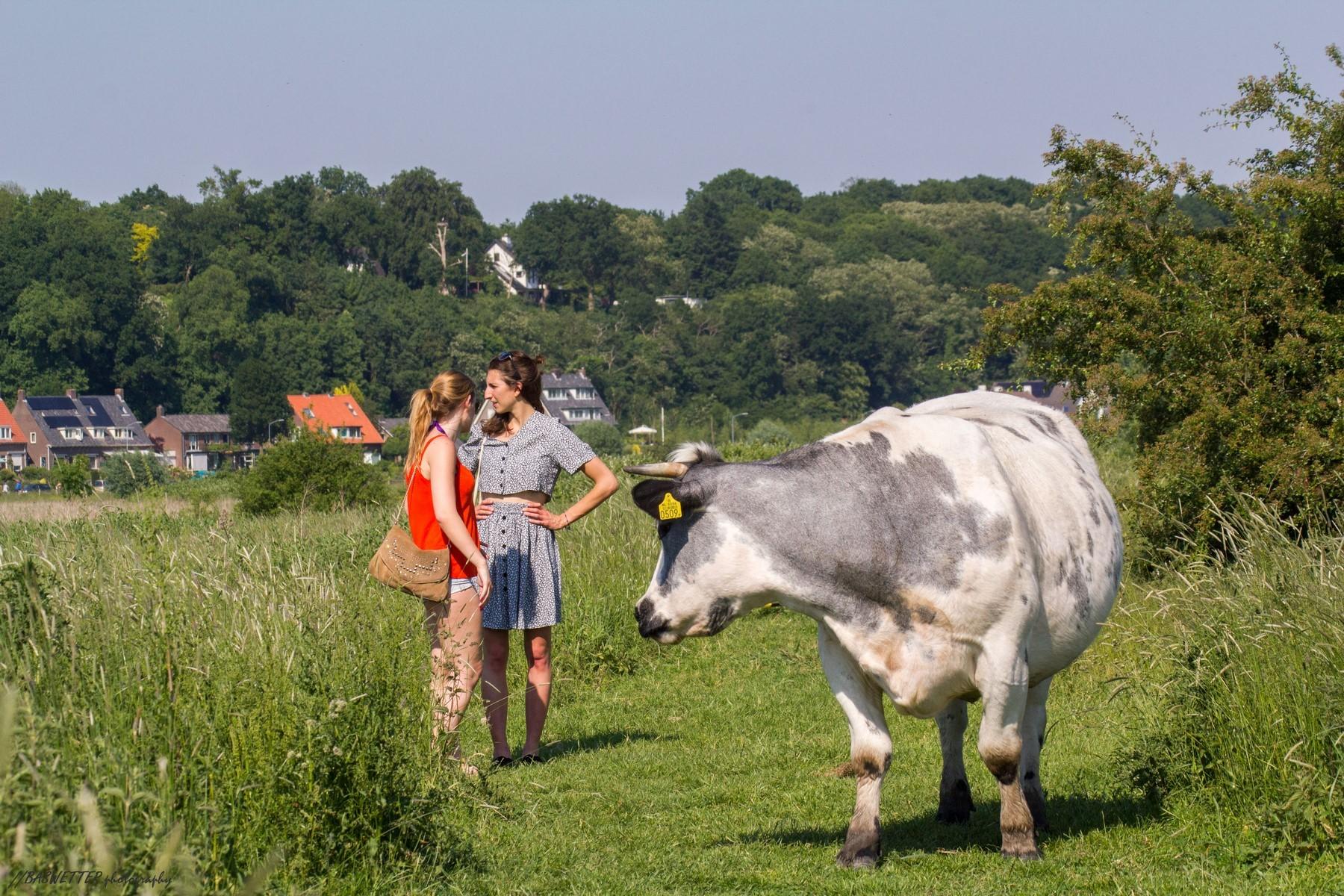 Overleg bij een koe blokkade in de uiterwaarden