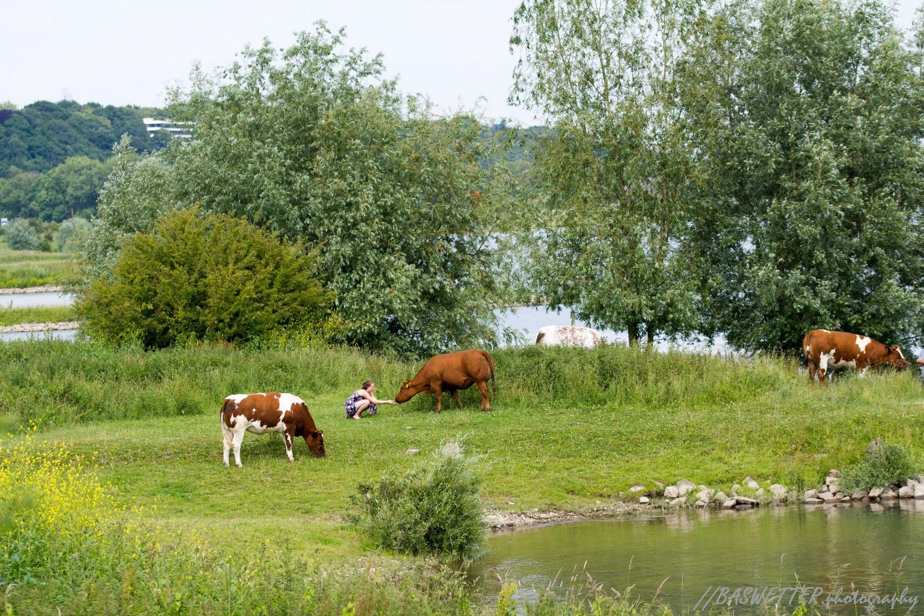 Een jonge vrouw en een koe aan de rivieroever