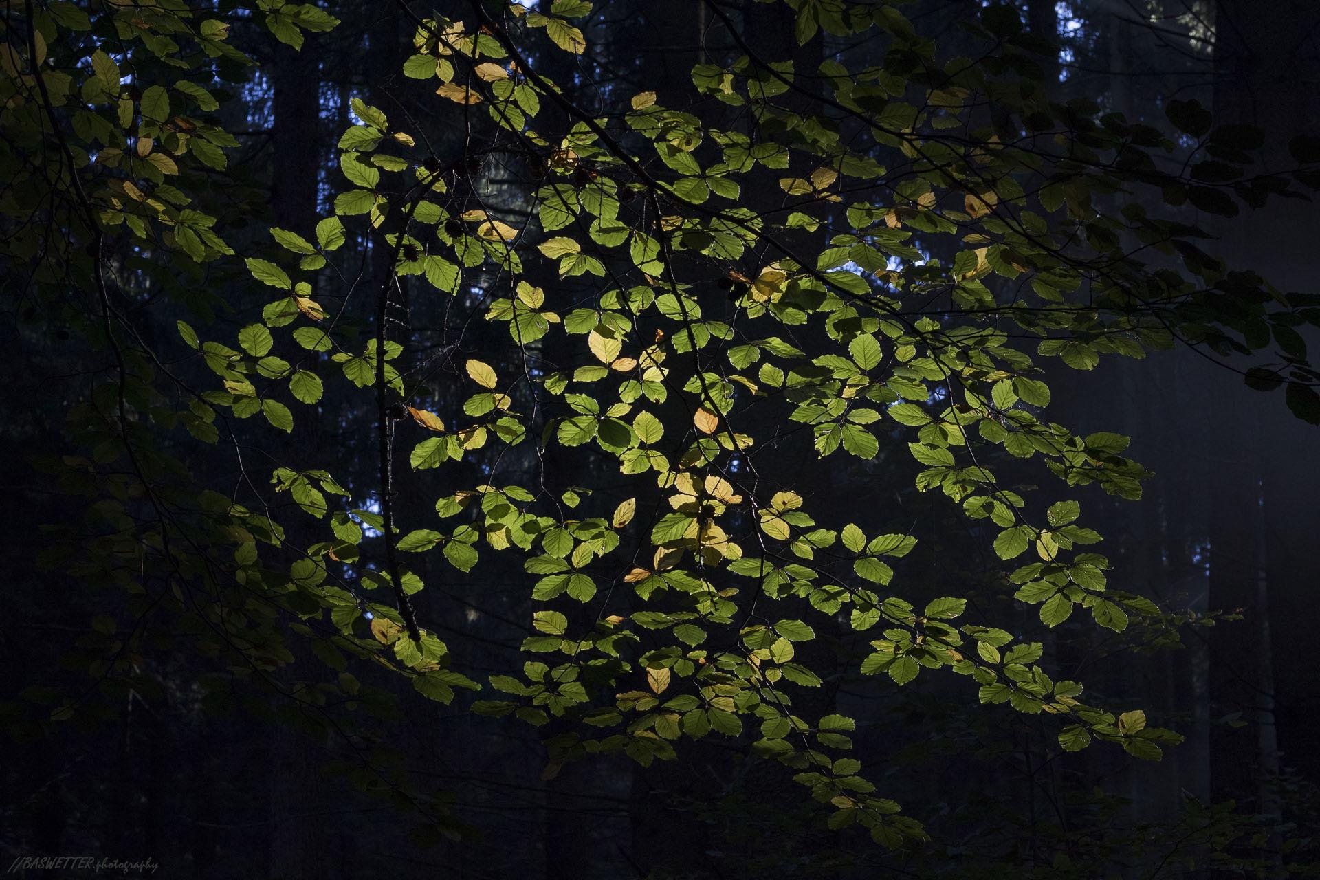 Herfst op de Hermannsweg